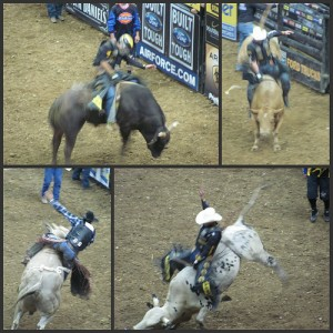 Professional Bull Riding Picnik collage 1