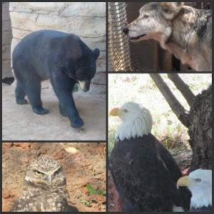Picnik collage Zoo