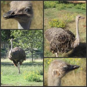 Picnik collage Ostrich