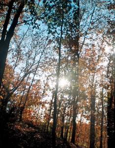 Autumn Sky Turkey Mountain