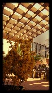 Linnaeus Garden Shadows