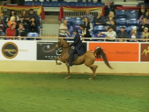 National Arabian Horse Show