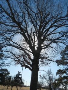 Walking Around Lafortune Park