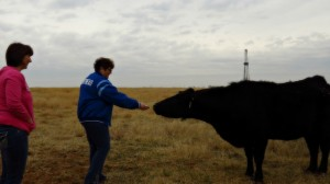 Six Word Sheri Feeding a Cow