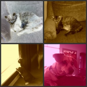 Takashi Picnik collage 1