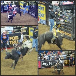 Professional Bull Riding Picnik collage