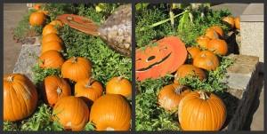 Picnik collage pumpkins