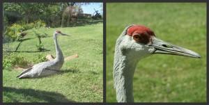 Picnik collage Bird 1