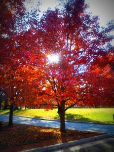 Philbrook Trees  edited
