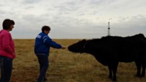 Six Word Sheri Feeding a Cow